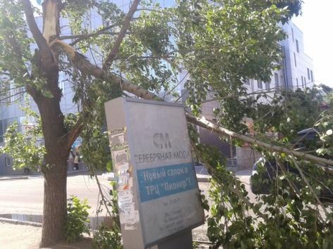 Сильный ветер сломал деревья в центре Улан-Удэ
