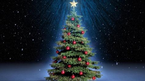 Житель Улан-Удэ пытался украть новогоднюю елку с автозаправки