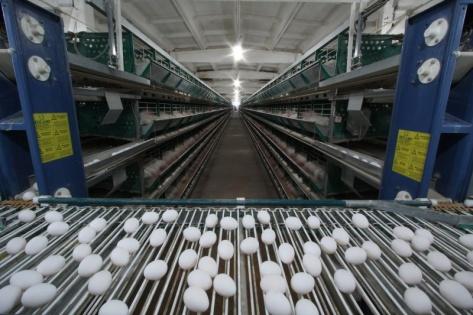 В Улан-Удэ планируют построить новый яичный комплекс на 40 млн. штук яиц в год
