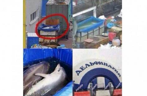 В Улан-Удэ опубликовали фото содержания дельфинов в передвижном Дельфинарии