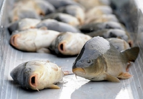 fish.gov.ru