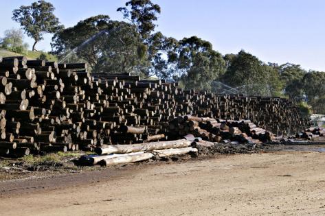 В Бурятии ликвидирован канал контрабанды леса