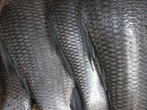 «Fish scales» участника Rajesh dangi из английский Википедия. Под лицензией CC BY 2.5 с сайта Викисклада - https://commons.wikimedia.org/wiki/File:Fish_scales.jpg#/media/File:Fish_scales.jpg