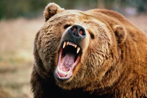 В Бурятии медведь напал на детей