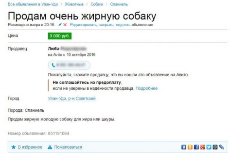 """В Улан-Удэ женщине разводившей собак на """"убой"""" устроили самосуд"""