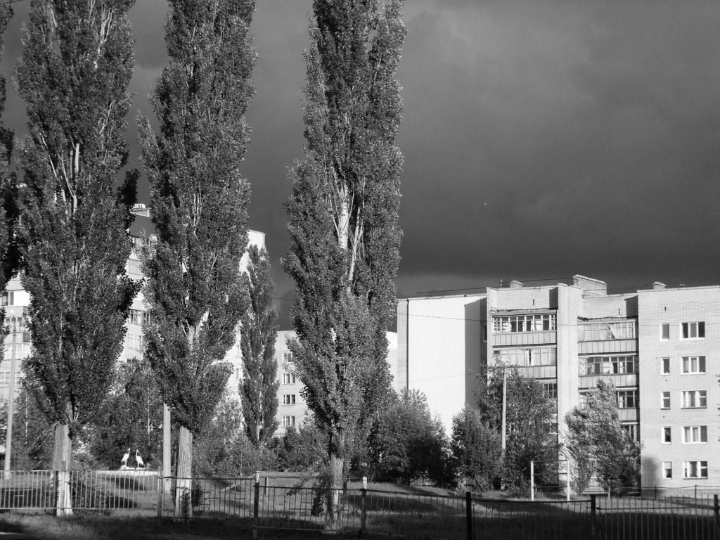 Почему в СССР обожали именно тополь и повсеместно его сажали, хотя от него много пуха