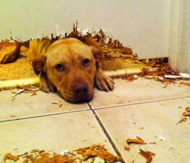 13 нашкодивших собак, пойманных с поличным
