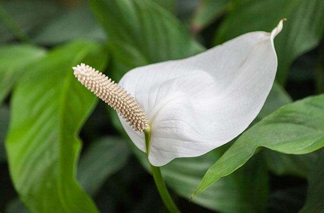 Кислородная бомба: Эти привычные растения помогут эффективно избавиться от токсинов в доме