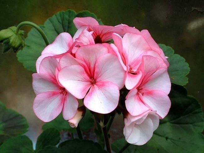 Этот цветок должен быть в каждой семье! И вот почему