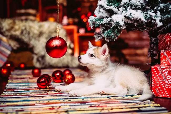 Как нужно встречать Новый год Собаки 2018