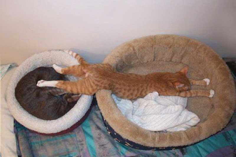 11 примеров забавной кошачьей логики