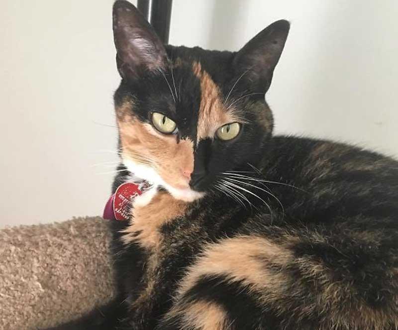 10 кошек с самым необычным окрасом шерсти