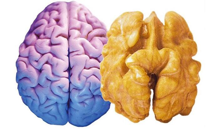 Почему еда полезна для той части тела, на которую похожа?
