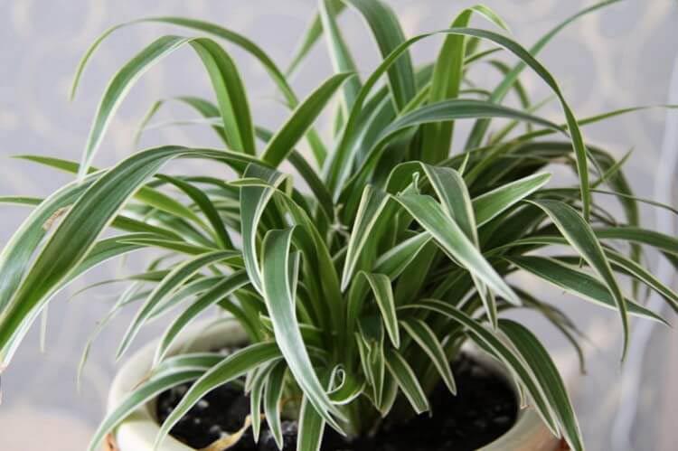 Великолепная шестерка растений, которые просто обязаны быть в вашем доме!
