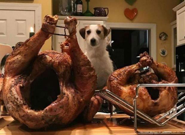 Смешные истории с собаками, которыми поделись пользователи интернета