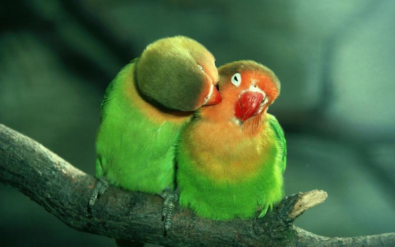 Как одна леди пыталась отучить своих попугаев от плохой привычки