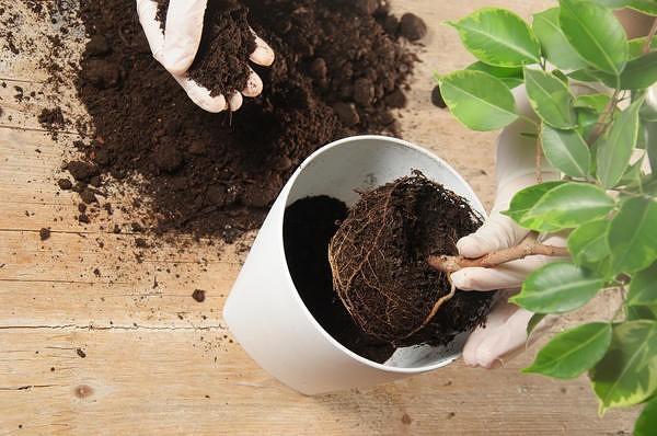 Лучшие подкормки для ваших комнатных цветов, которые оживят даже самое безнадежное растение!