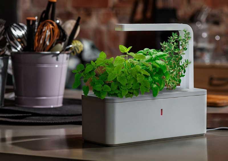6 оригинальных способов озеленить квартиру